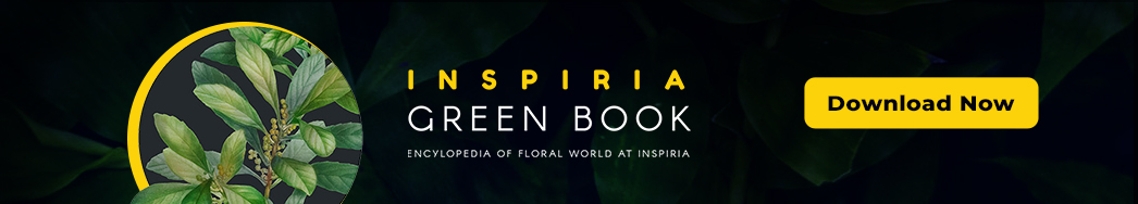Inspiria Green Book-download a copy
